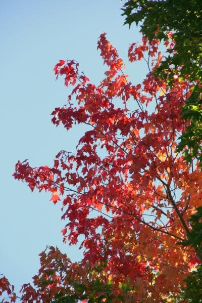 Yep, fall's starting to burst into its glory
