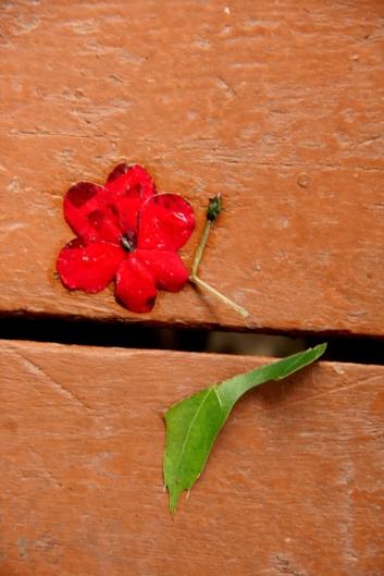 Impatiens blossom falls on front porch
