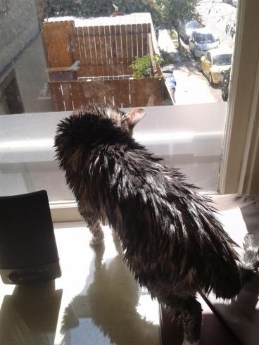 Mango after a bath!