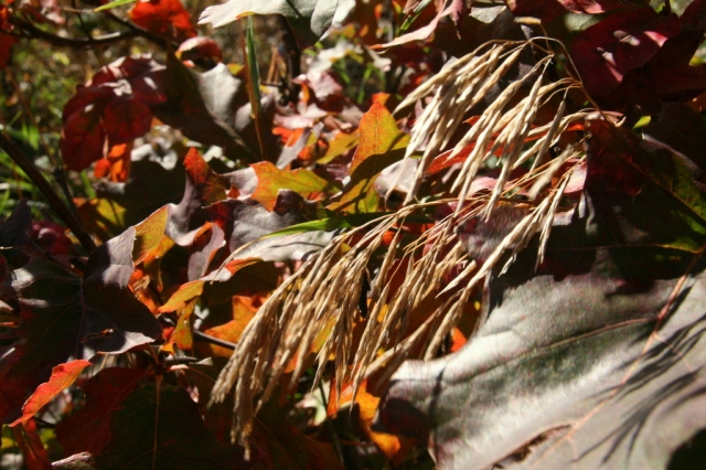 Dried grasses, autumn leaves