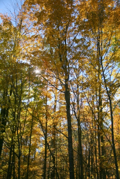 When the yellow sun shines through yellow leaves...