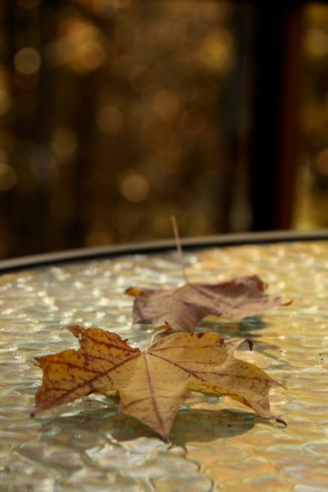 Leaves fall gently