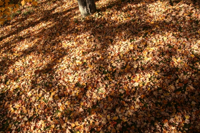 Leaves blanket our earth