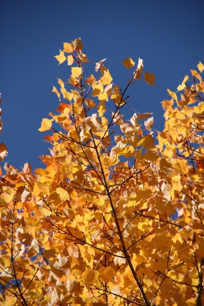 Leaves wave against a bright blue sky