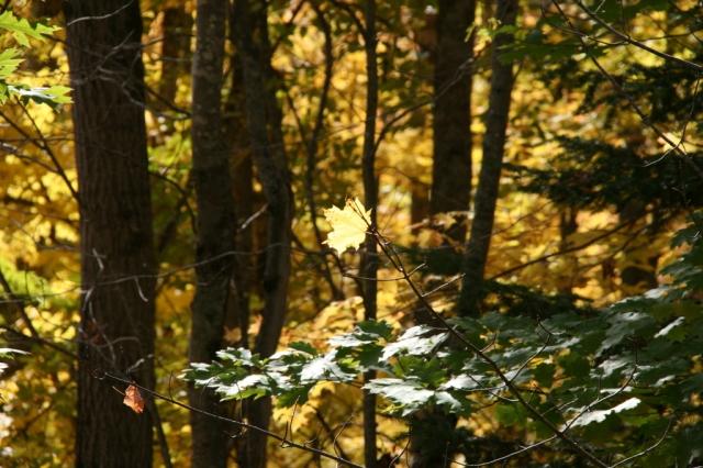 Single shining twirling yellow leaf
