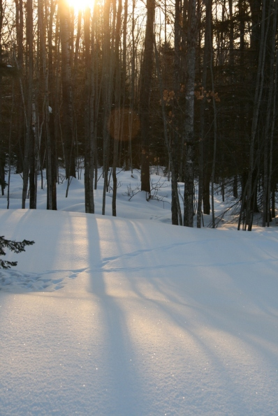 Dawn shadows on snow, deer tracks
