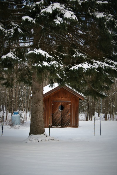 Our little shed in the big woods