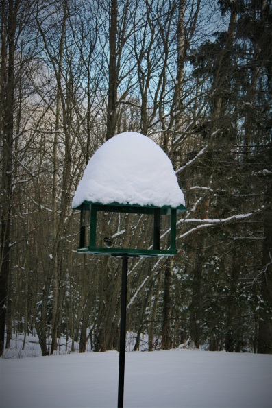Our bird feeder (and small chickadee) in the big woods