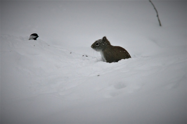Squirrel and bird love