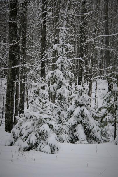 Snow, snow, February snow