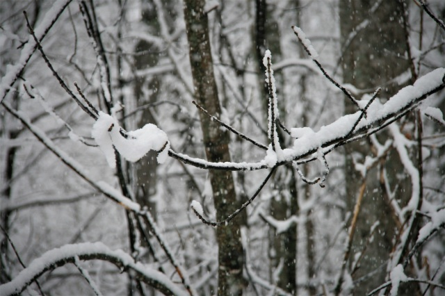 Snow forms, twists, melts, hangs on for dear life
