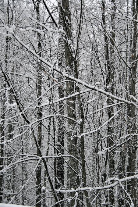 """Frosting snow"""