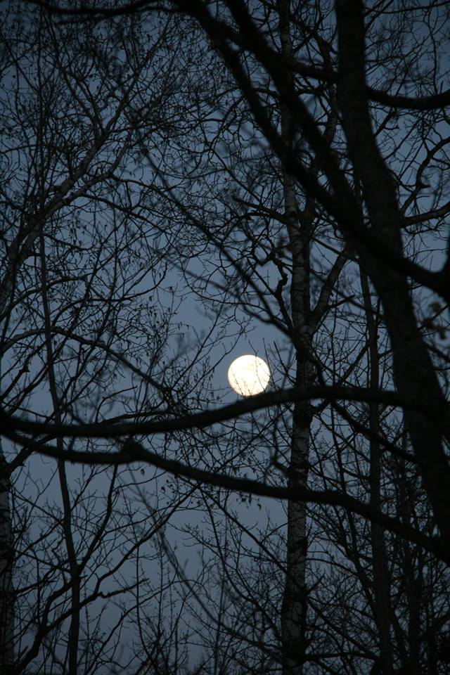 Last month's moon sitting on a tree branch