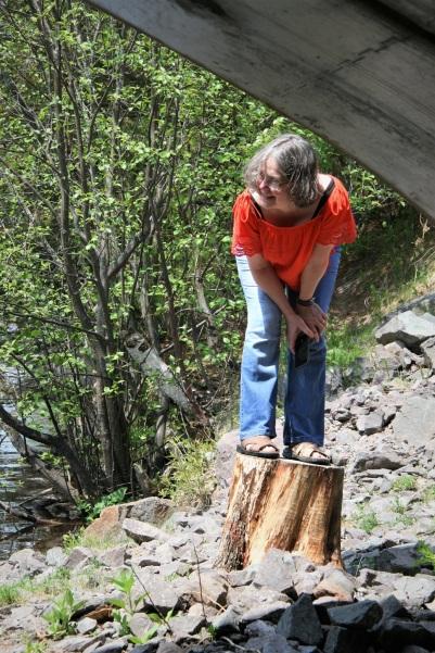 Sherry retreats to safe stump