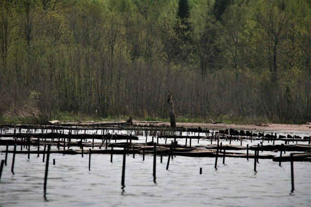 Old underwater posts near the Slate River