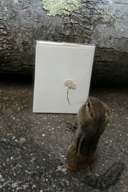 "Tame chipmunk ""Chippy""  admiring one of your note cards"