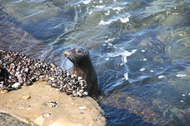 California seal March 2011