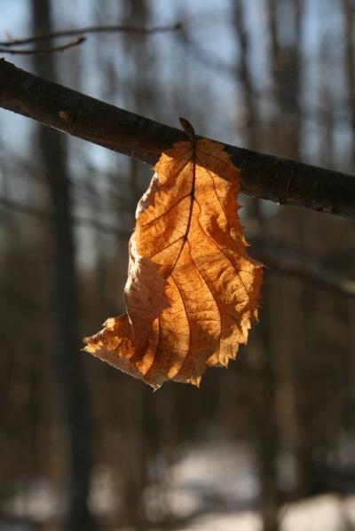 pretty leaf 1